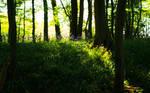 Bluebell Light