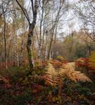 Fern and Birch