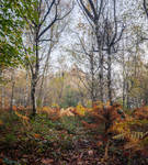Of Beech and Birches
