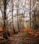 Birch Barks