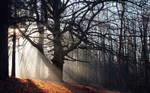 Mystified Tree