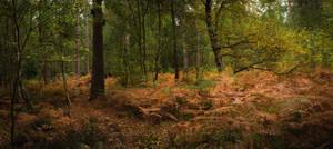 Blazzing a Trail