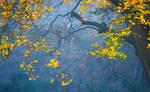 Misty Autumn Blue
