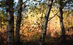 Back to Autumn II