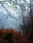 Ashen Wood