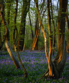 Blue Green Wood