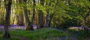 Deep Blue Wood