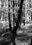 Arboreality
