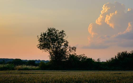 Rowan Cloud