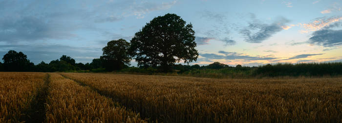 Panoramic Twilight