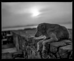 Sleepy dawn #3 by Roger-Wilco-66