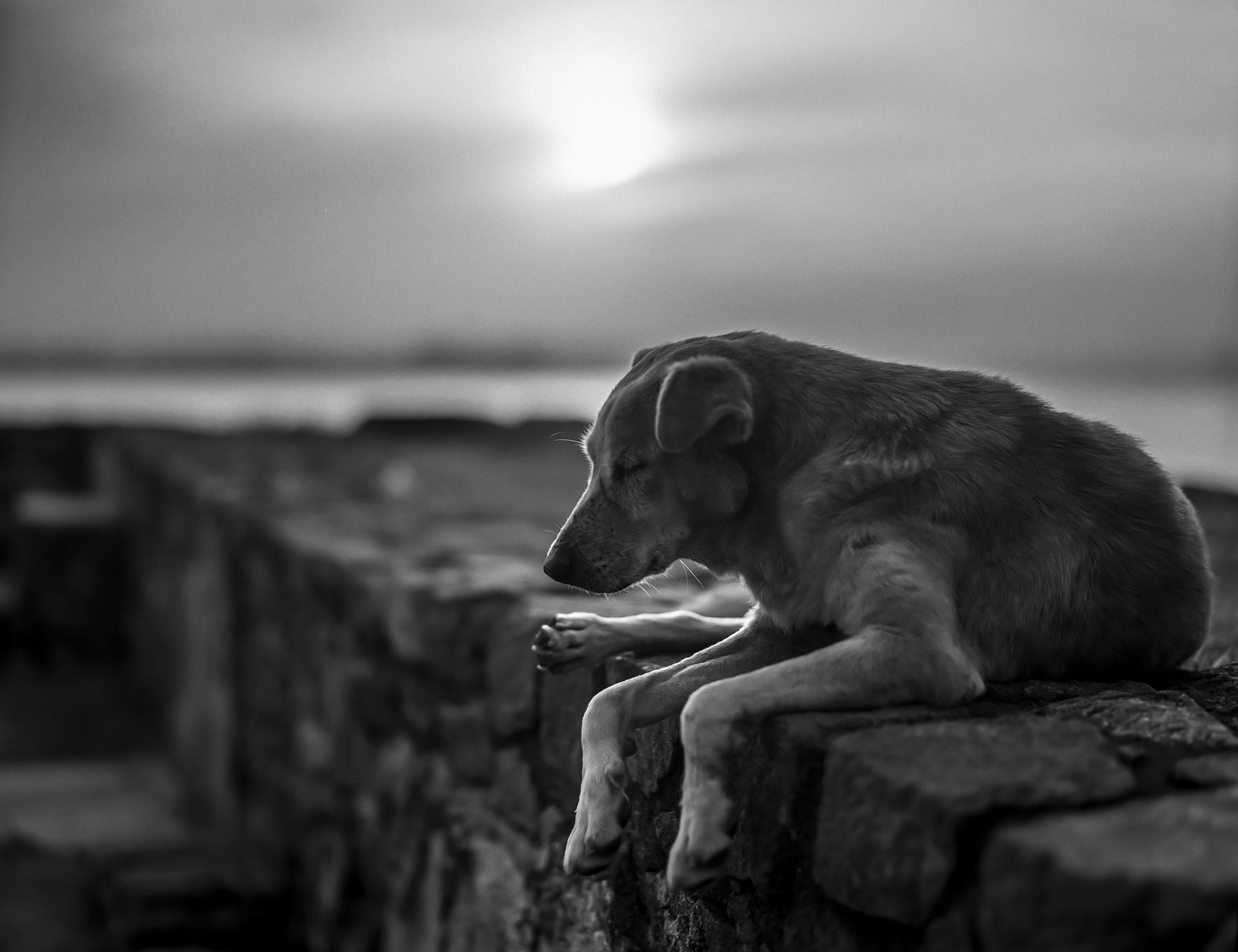 Sleepy Dawn #4 by Roger-Wilco-66