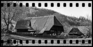 Black Forest Farm