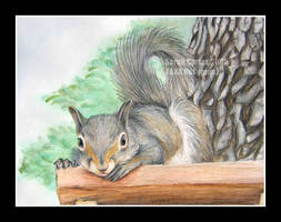 Squirrel by sarahcarter