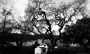 Tree and Building  by sethses1