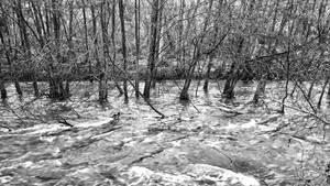 Flooding Cottonwood #2 by sethses1