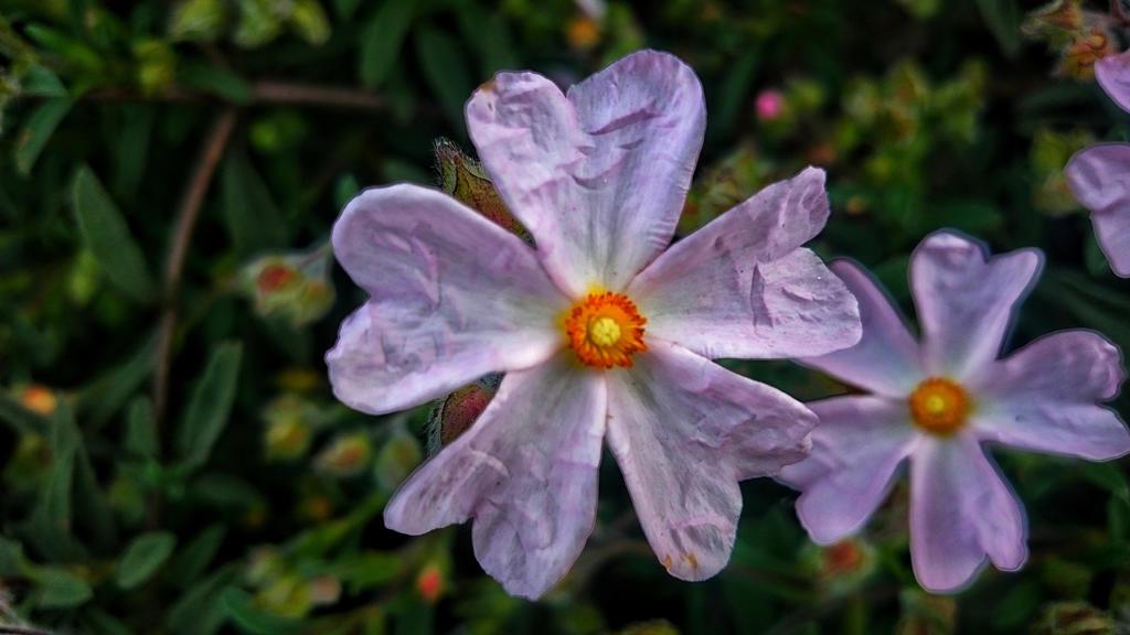 Blooms by sethses1