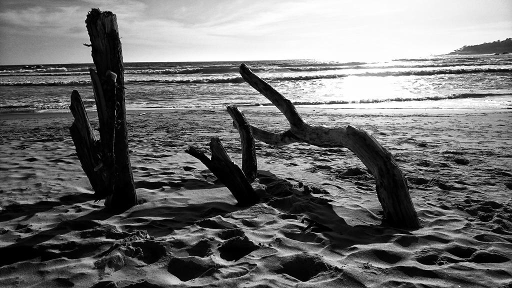 Driftwood  by sethses1