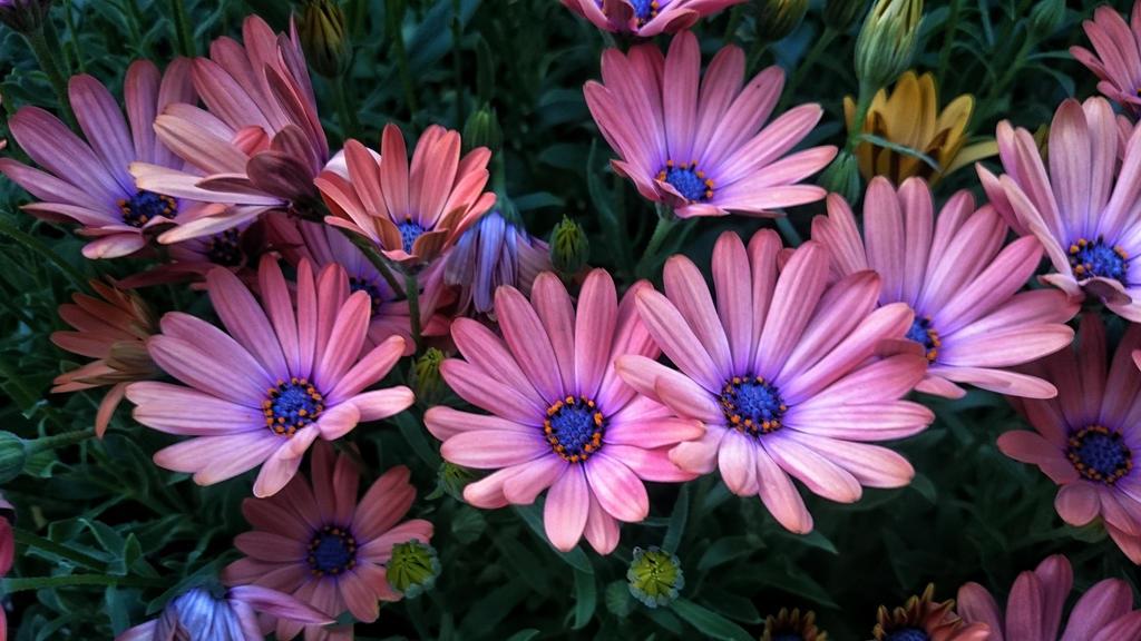 full bloom  by sethses1