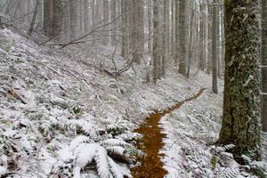 Forest Frolic by DreaErvin