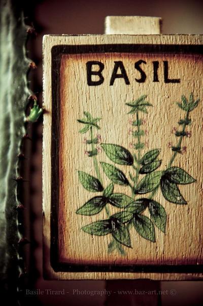 Basile-Tirard's Profile Picture