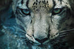 Snow Leopard by KrisVlad
