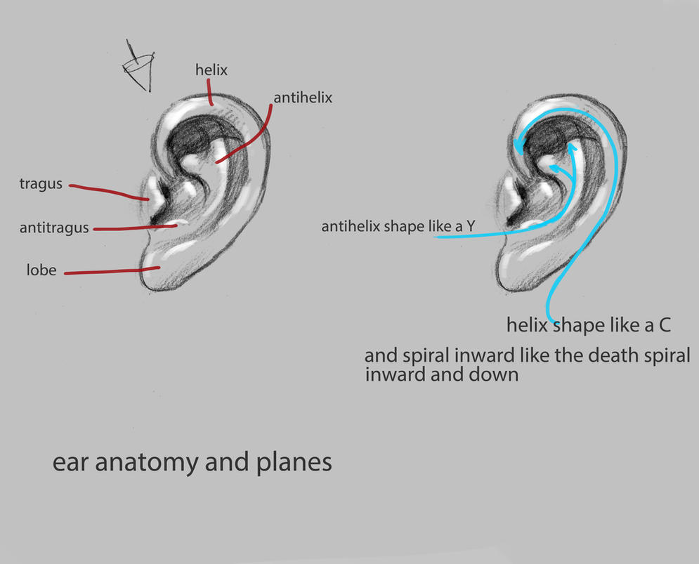 ear anatomy and planes by nosoart
