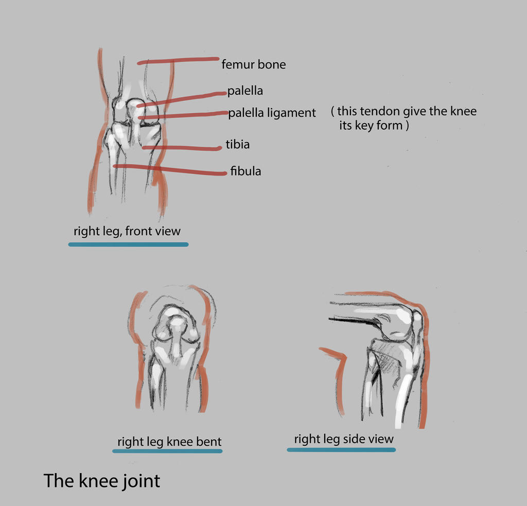 the knee joint by nosoart
