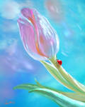 foral designs 08 by nosoart