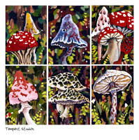 Mushrooms ACEO Set by TempestErika