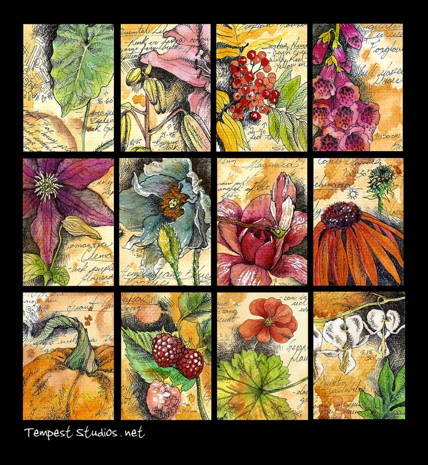 Botanical Studies / ATC