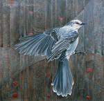 Canada Grey Jay Vivace