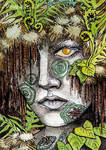 Rainforest ATC