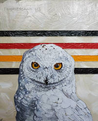 Usual Suspects: Snowy Owl
