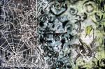 Cobweb by TempestErika