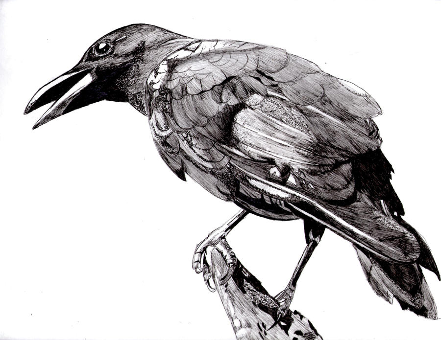 crow by 23 hour party people