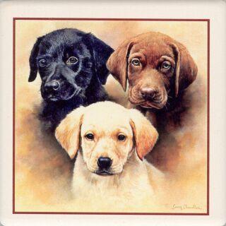 Dogs by Skystar25