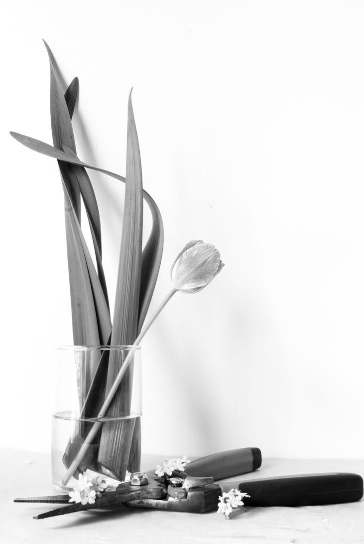 SpringingID by tiganesc