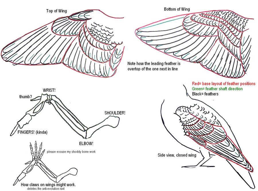 Wing Tutorial by TNHawke on DeviantArt