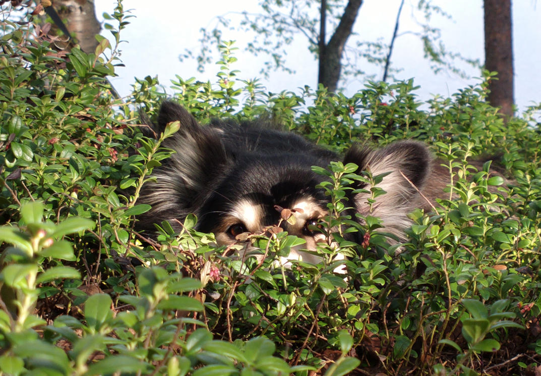 Hiding by janzu77