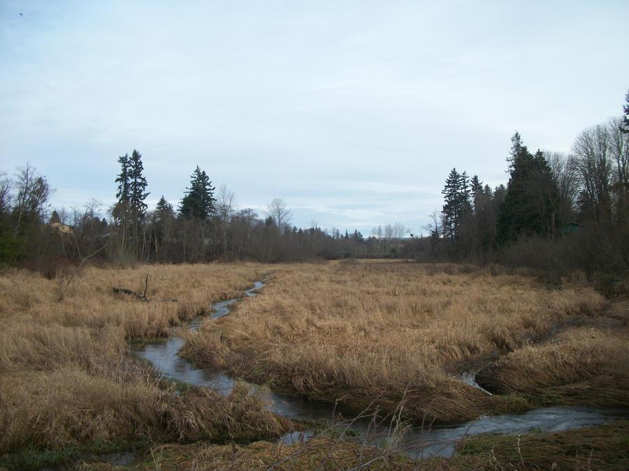 Wetlands by pokemontrainerjay