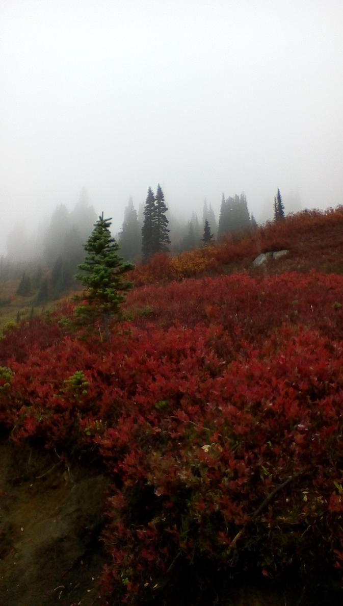 Fall color at Mt.Rainier 5 by pokemontrainerjay