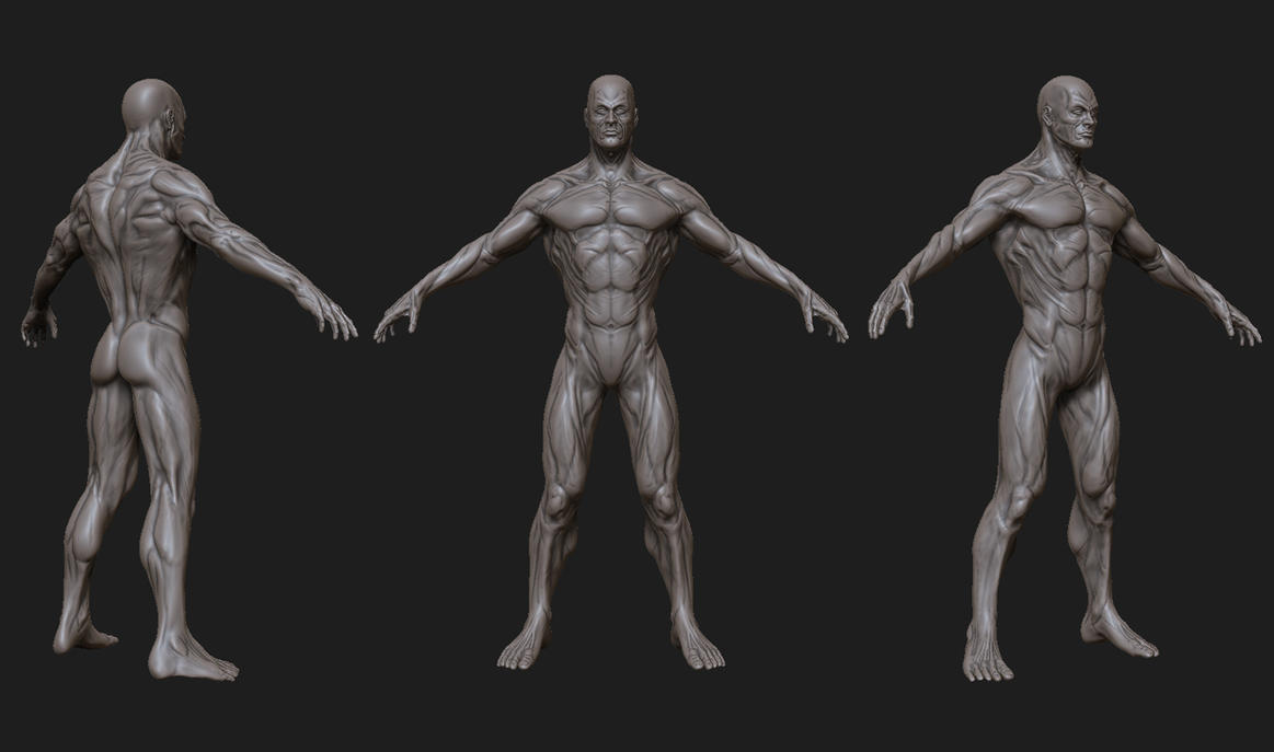 3d anatomy study by exyal on DeviantArt