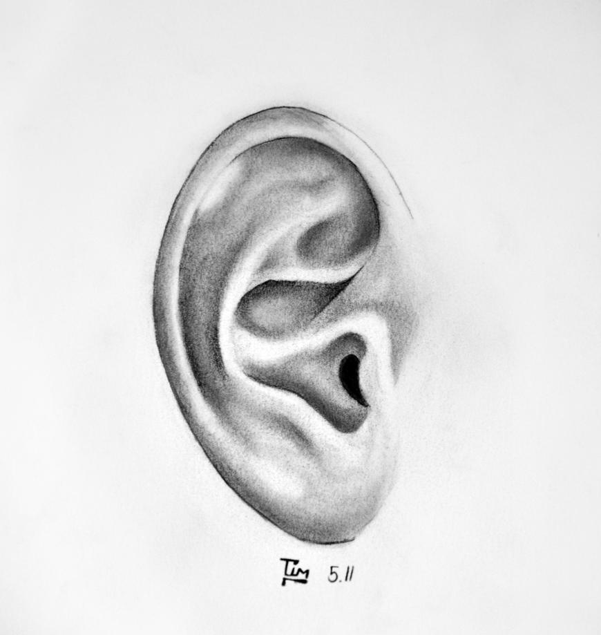 Human Ear Drawing | www.imgkid.com - The Image Kid Has It!