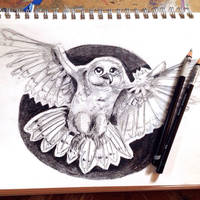 Snow Owl by PeppyPixel