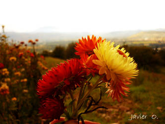 Flores by kdito
