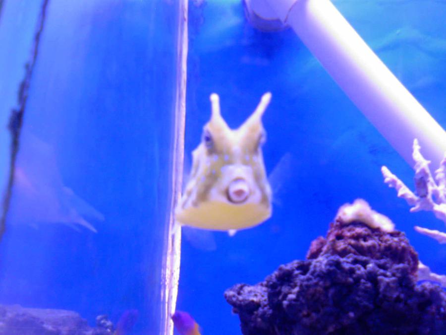 Flat bottom fish by aymelekmt on deviantart for Fish 2 flirt