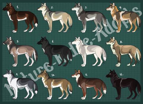Natural Wolf Design Adopts 06: CLOSED