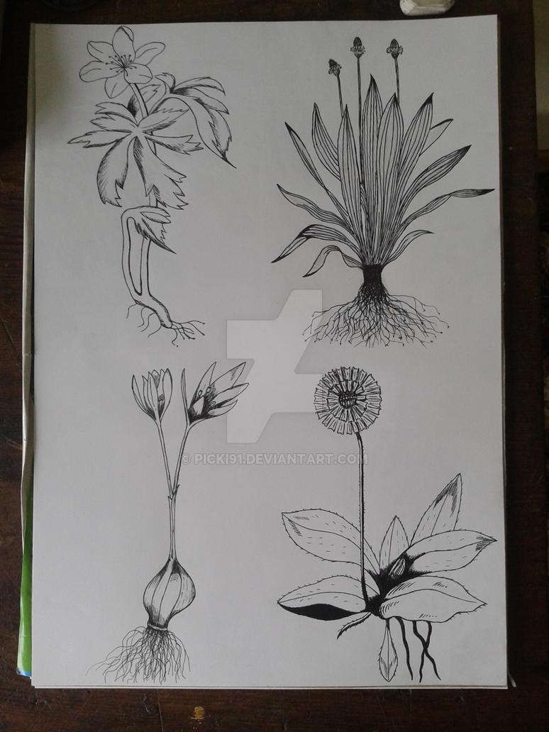 Wild Flowers by Picki91