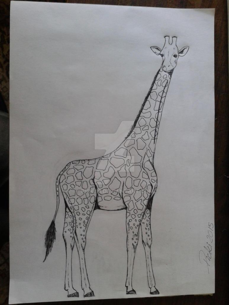 Giraffe by Picki91